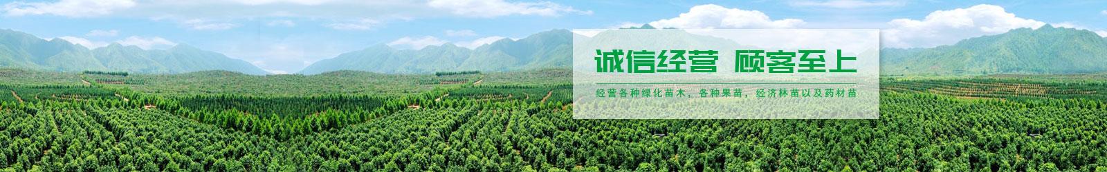 水果苗木价格